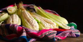 ¿El maíz de Urubamba es el mejor del mundo?