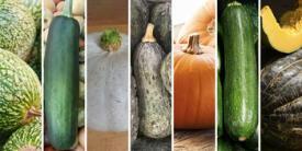 7 variedades de zapallos y calabazas