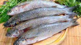Pescado económicos (y no tanto) para hacer ceviche