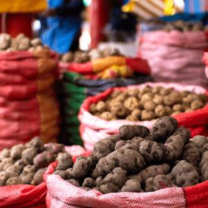 Papa peruana: variedades, características y usos