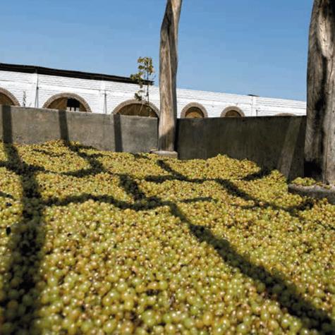 Uvas en proceso de fermentación.