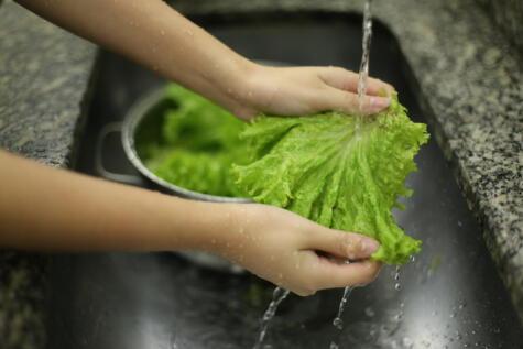 Lava las lechugas y otros vegetales de hojas con agua corriente.