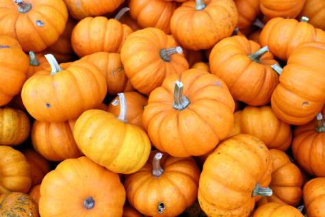 La calabaza anaranjada es una variedad propia de Norte América, se usa en tartas, purés, guisos y hasta para hacer cerveza.