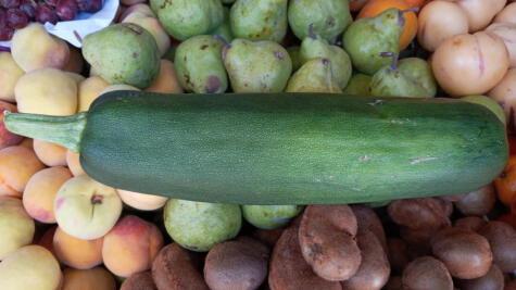 La calabaza arequipeña mide unos 40 cm. y se usa en el ají de calabaza. Foto: Ernesto Calmet.