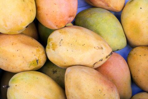 El Edward es un mango de tamaño mediano, con muy buena acidez y abundante pulpa.