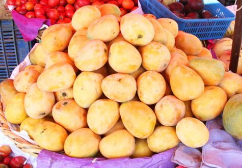 El mango criollo es pequeño, con cáscara gruesa, de baja acidez y fibroso.