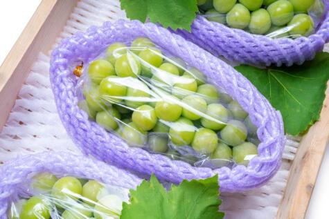 Las uvas de exportación son las de mejor calidad.