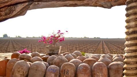 Buena parte de la producción local se destina a la elaboración de pisco. Algunas uvas piqueras se consumen frescas, como la italia.