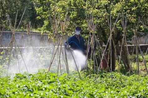 El uso indiscriminado de agrotóxicos tienen efectos nefastos en el medio ambiente.