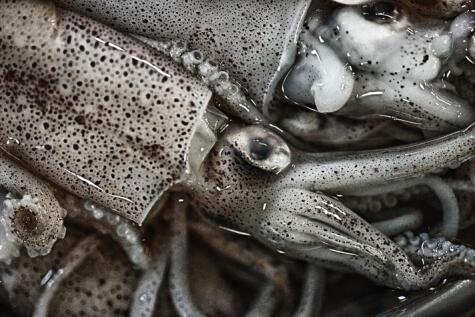 los ojos y tentáculos deben verse brillosos y bien puestos en su sitio.