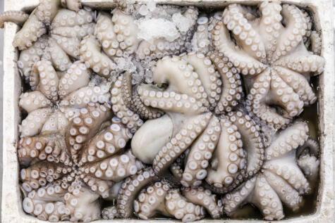 Los tentáculos bien formados y que no se vean flácidos son garantía de frescura.