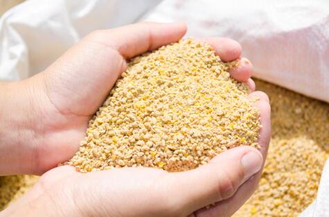 La alimentación es en buena parte responsable del color de la piel del pollo.