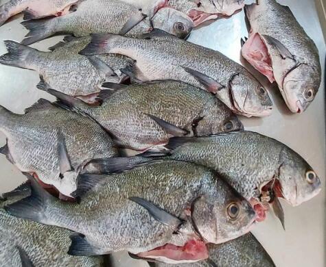 Pescado fresco y limpio, entero o en filete, de manos de los que saben: el equipo de <strong>S'Concha</strong>.