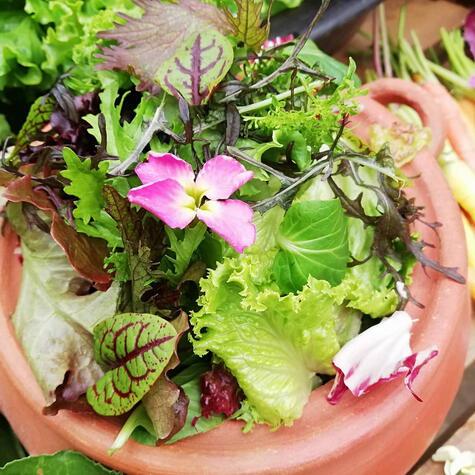 Don Torcuato produce todas sus hortalizas y frutos en el valle de Pachacamac.
