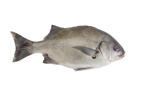 La chita suele usarse mucho en el sudado, pero muchas veces no se respeta la talla o peso mínimo.