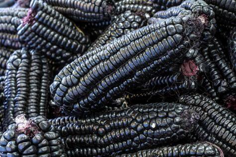 El maíz morado debe estar bien seco y soleado.