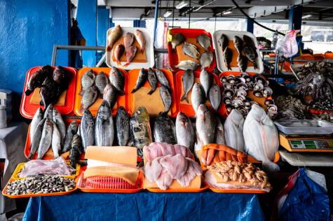 ¿Sabes qué escoger? ¿Pescado de peña, de carne blanca o túnido?