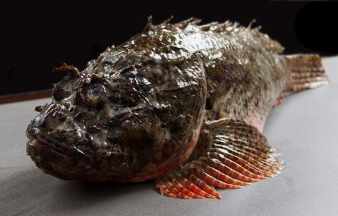 """El pez diablo es una joya que se presta muy bien; pero tiene precio alto. Foto: <strong><a href=""""https://www.facebook.com/LaMarCebicheriaPeruanaLima/"""">La Mar Cebichería Peruana</a></strong>"""