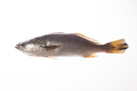 La corvina, y en general, los pescados de carne blanca, van bien con la leche de tigre clásica.
