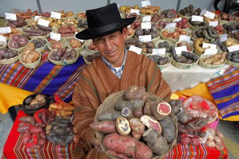 Los agricultores son también guardianes de la biodiversidad, cultivando cientos de variedades de papas.