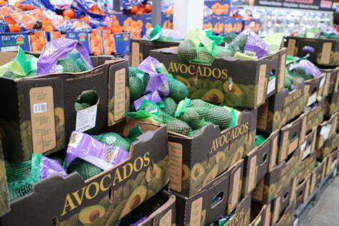 Avocado es otra forma de llamar a las paltas en Estados Unidos.